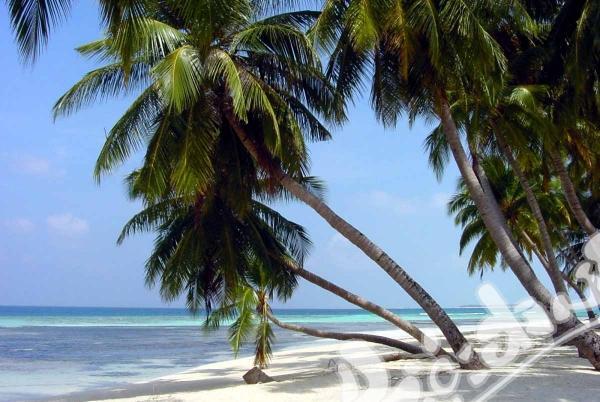 Научи английски език на плажа в Маями!!