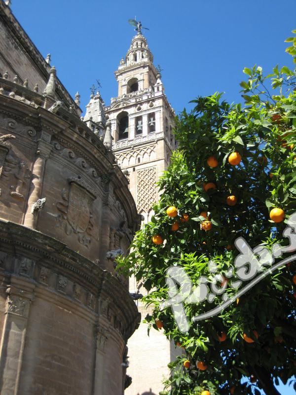 Испански език в историческия център на Севиля, Испания!