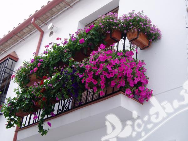 Интензивни курсове в историческия център на Севиля, Испания!
